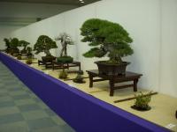日本盆栽青樹展