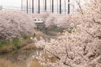 池田川河畔