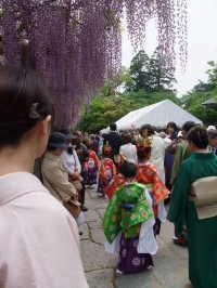 武蔵寺の藤